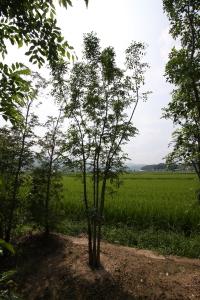 植樹ツアー