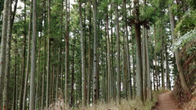 奈良県産材を使用した住宅の助成制度について